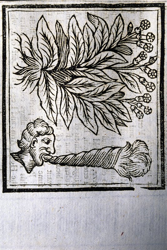 Art of tobacco plant and man smoking