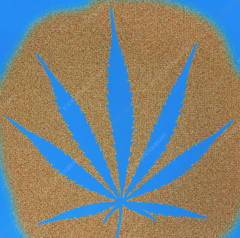Artwork of hemp plant leaf, Cannabis