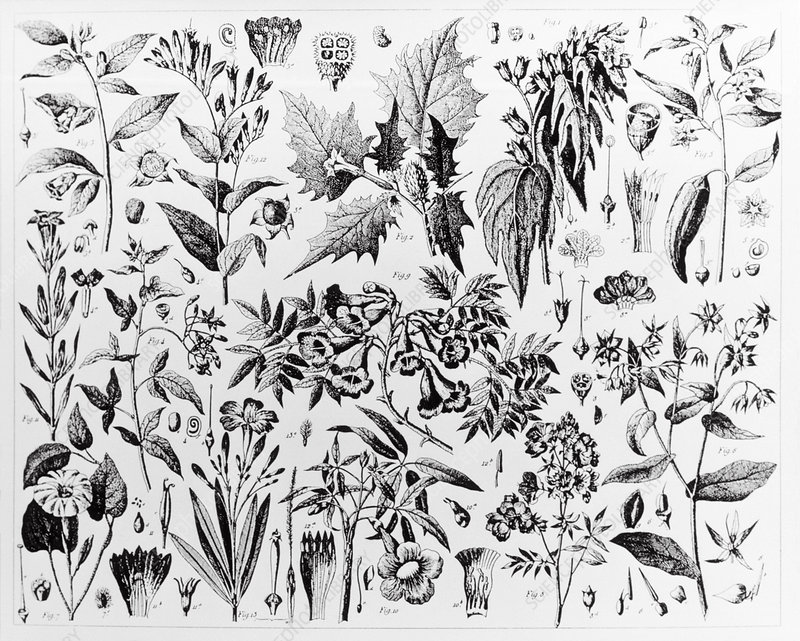 Historical art of assorted medicinal plants