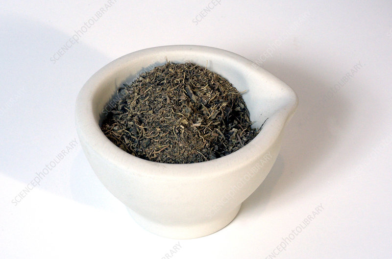 Ground Blue Cohosh Root