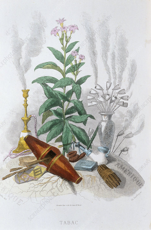 Tobacco, historical artwork