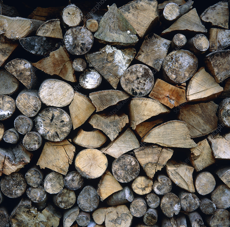 Part-seasoned firewood, including beech.