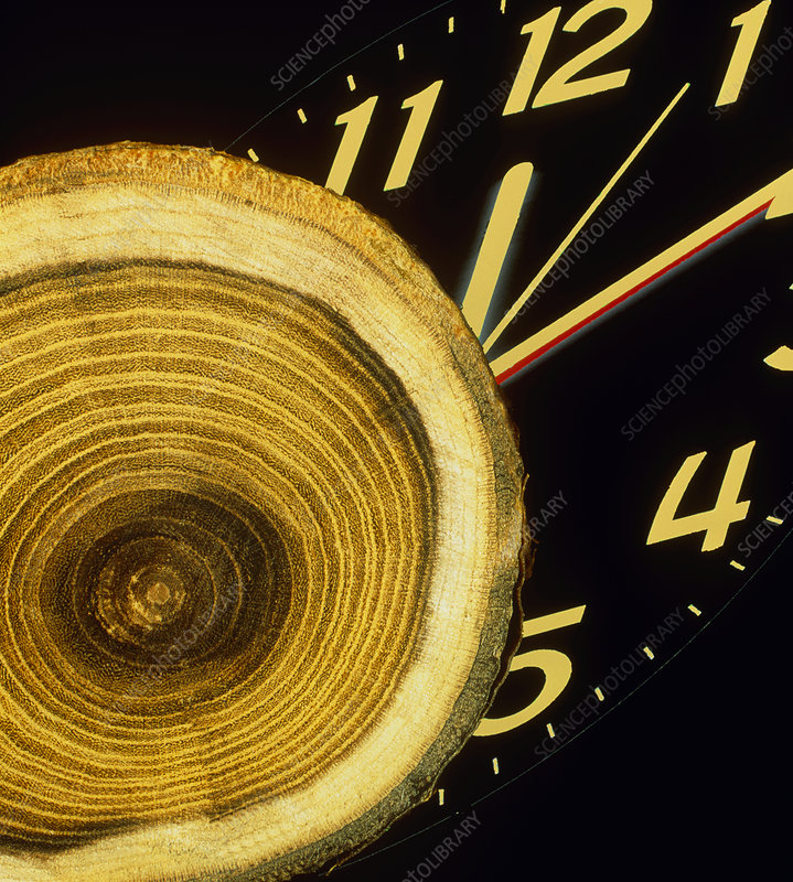 Tree growth rings and clock face