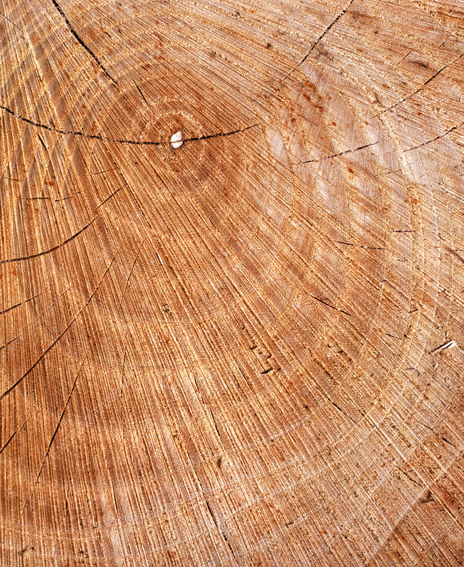 Growth rings in sectioned tree trunk