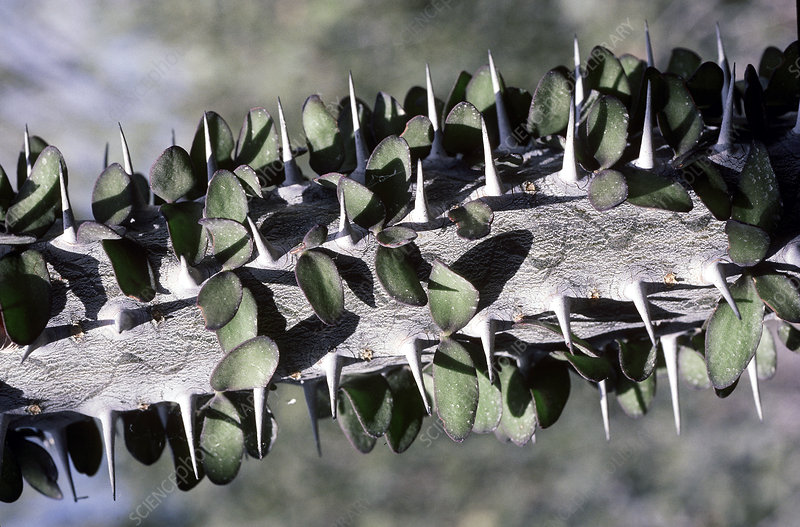 Convergent evolution with unrelated plants