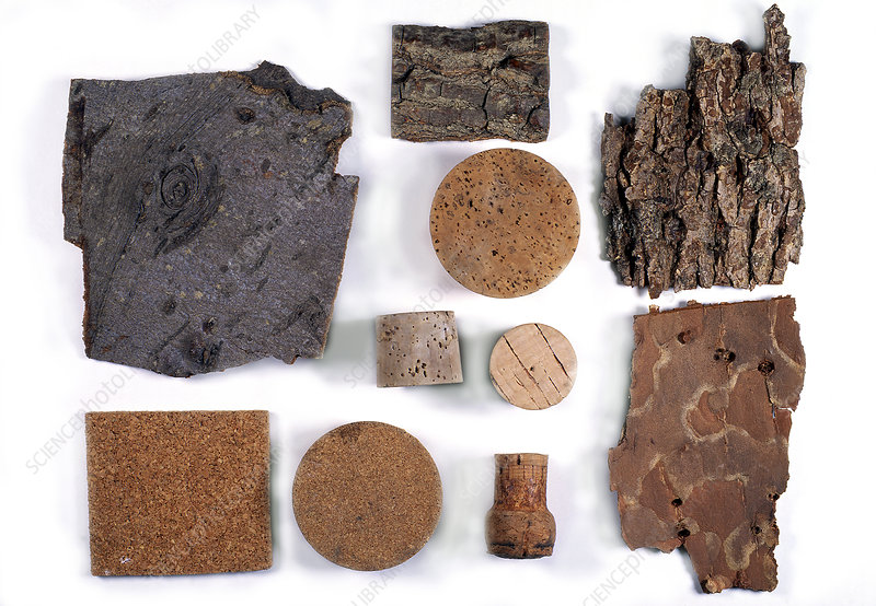 Bark and commercial cork