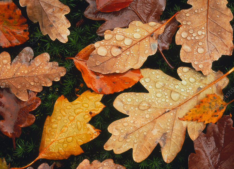 Autumn colours of fallen leaves