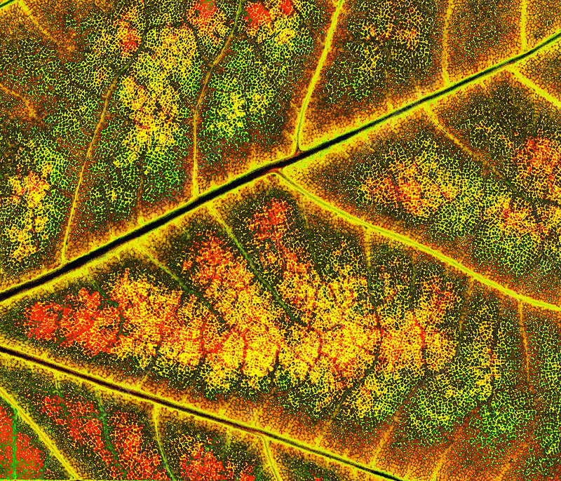 Autumnal leaf surface
