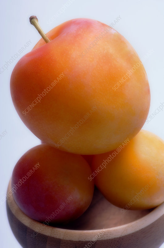 Yellow plums (Prunus hybrid)