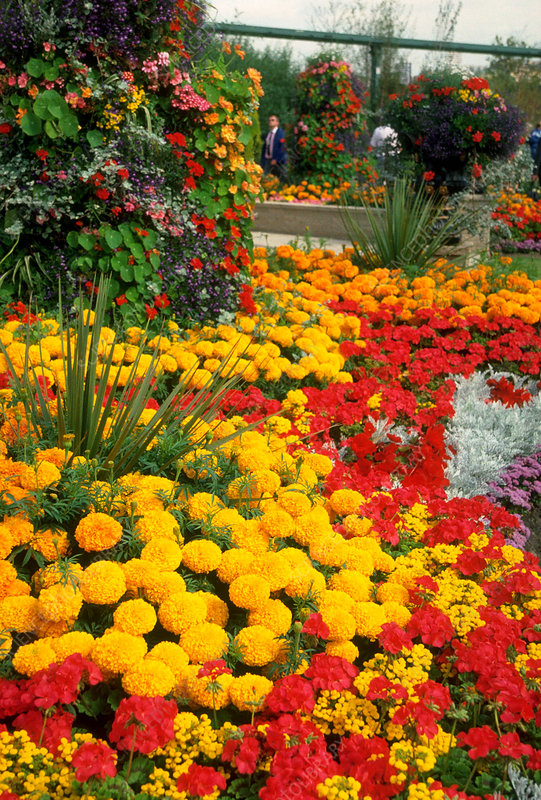 Colourful borders in summer.