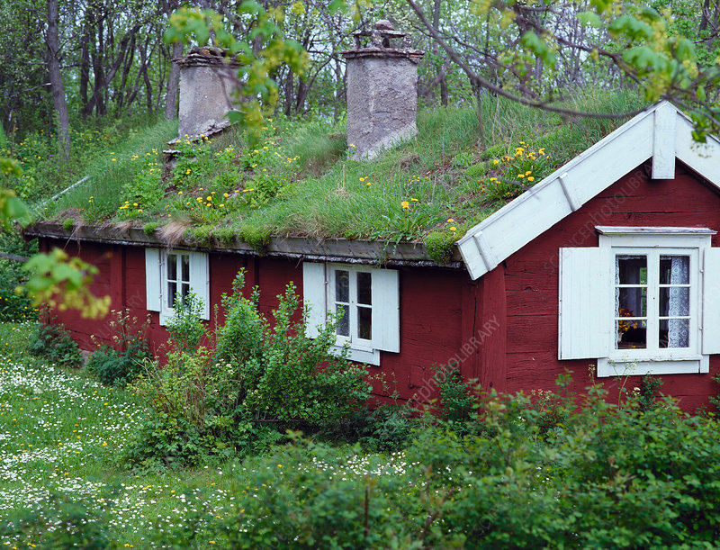 Grass roof on house.