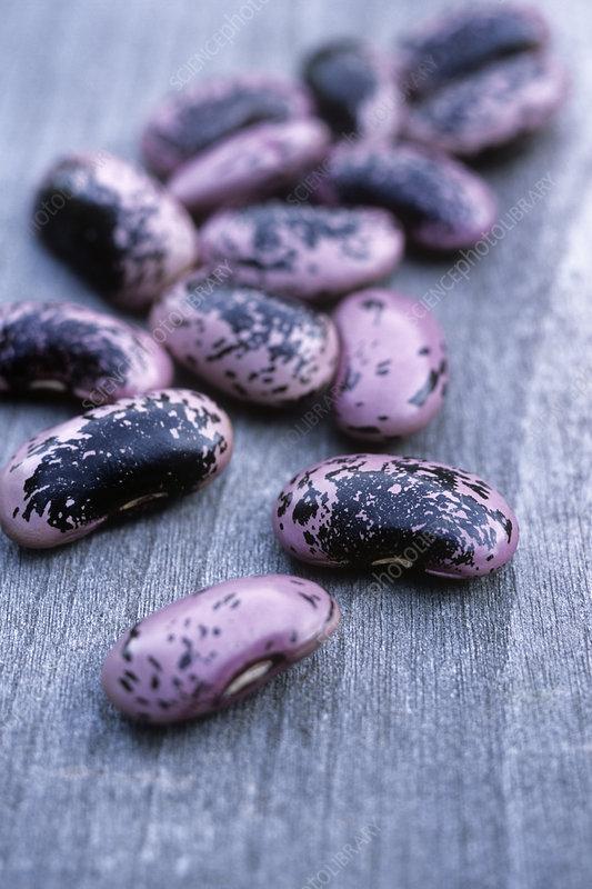how to cook scarlet runner beans fresh