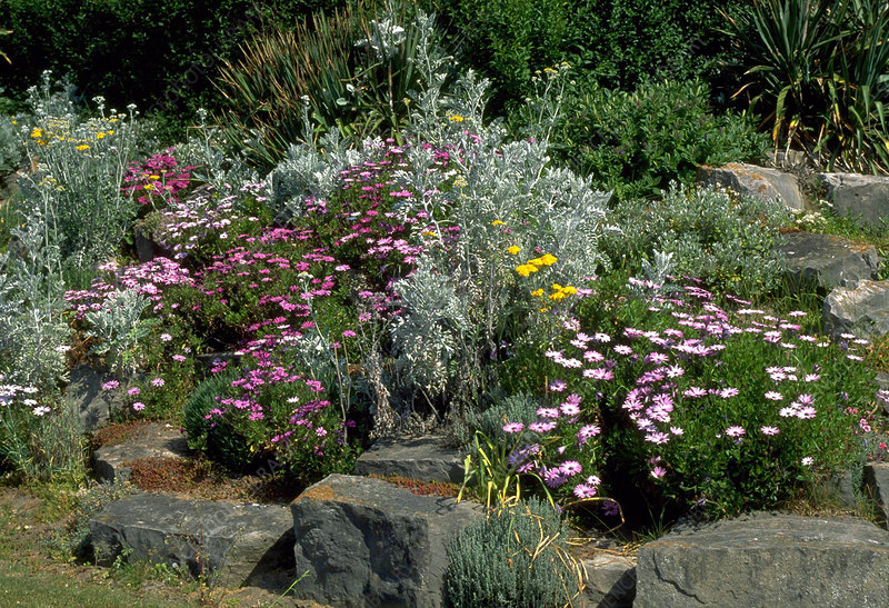 Seaside rockery garden