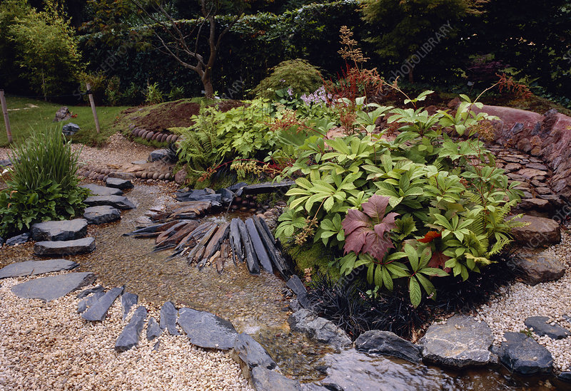 Plants in a rock garden