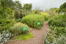 Dilston Physic Garden, Northumberland, UK