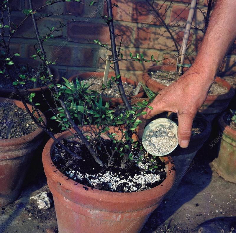 Adding fertiliser to pots