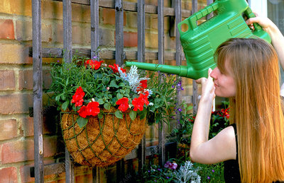 Watering wall basket