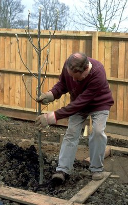 Planting a tree (image 4 of 6)