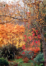 Garden in autumn