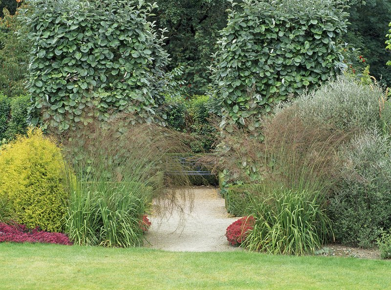 Plantsmans foliage garden, RHS Rosemoor