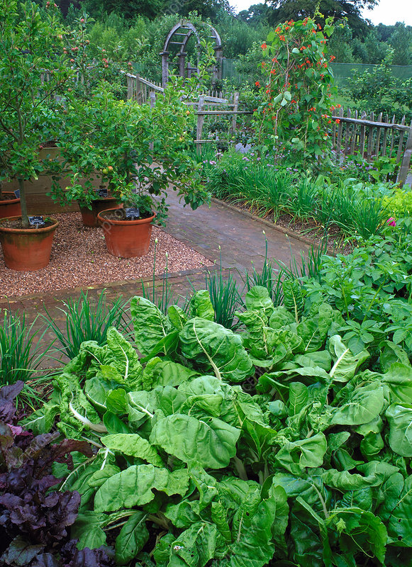 Fruit and vegetable garden
