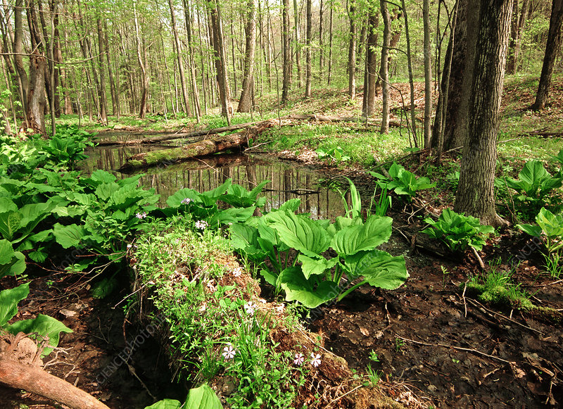 'Verenal Pond, PA'