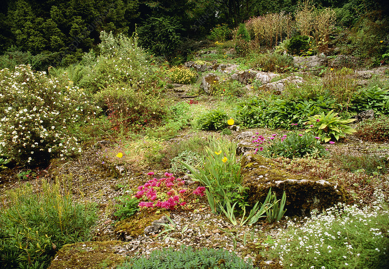 Alpine rockery