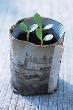 Biodegradable newspaper pot