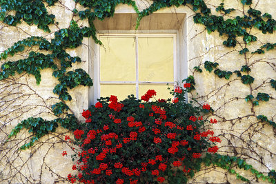 Vine and Flowers Around a Window