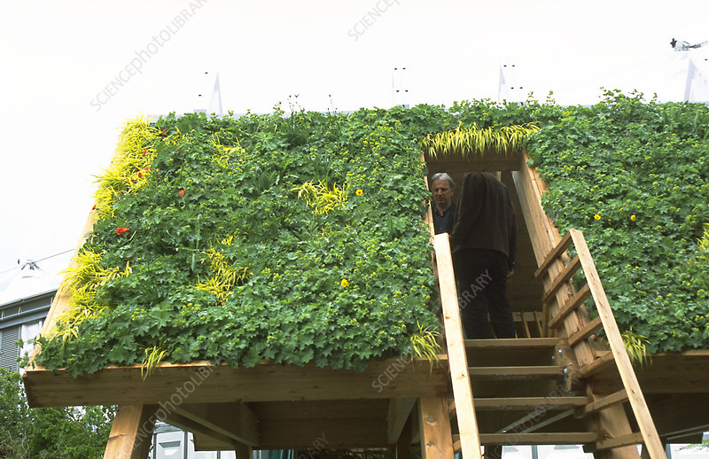 Living green roof
