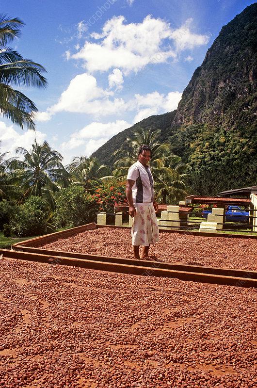 Cocoa Beans, St. Lucia