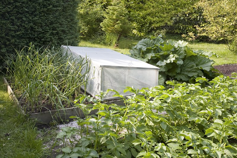 Protective cover in a vegetable garden