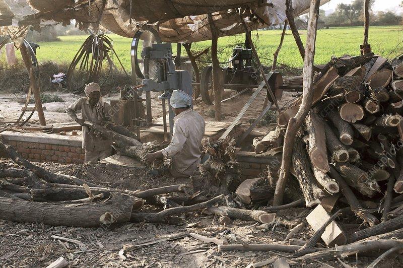 Cutting fire wood, India