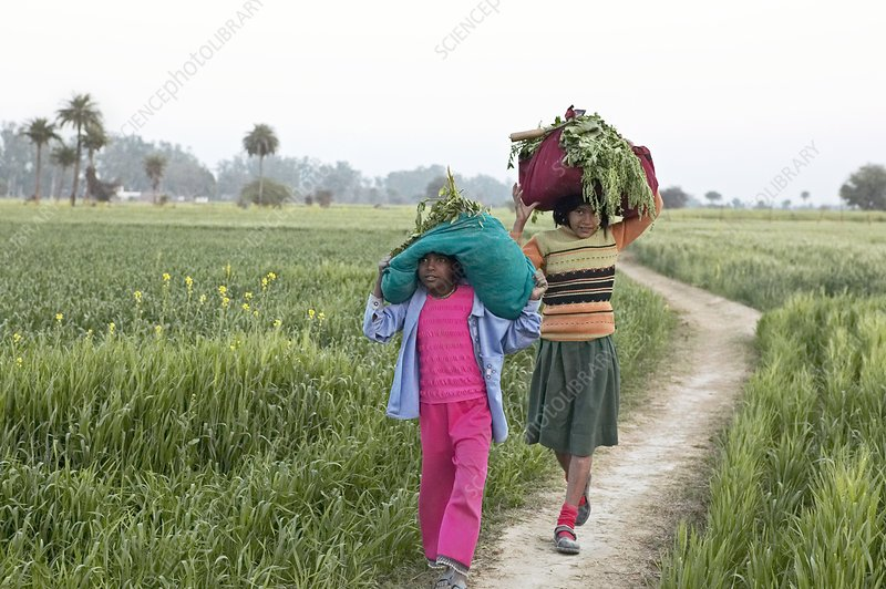 Children carrying crops, India