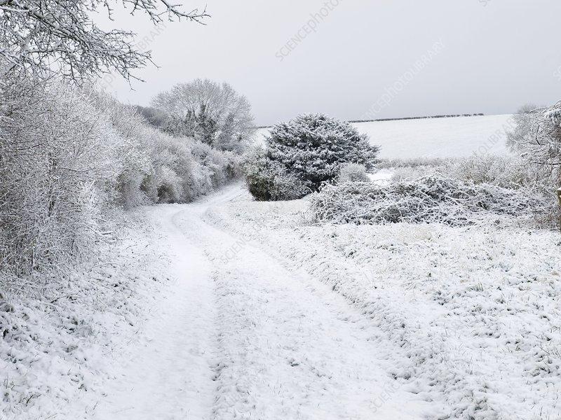 Snowy landscape, Dorset