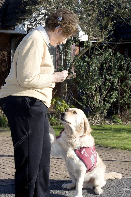 Deaf woman and her hearing dog