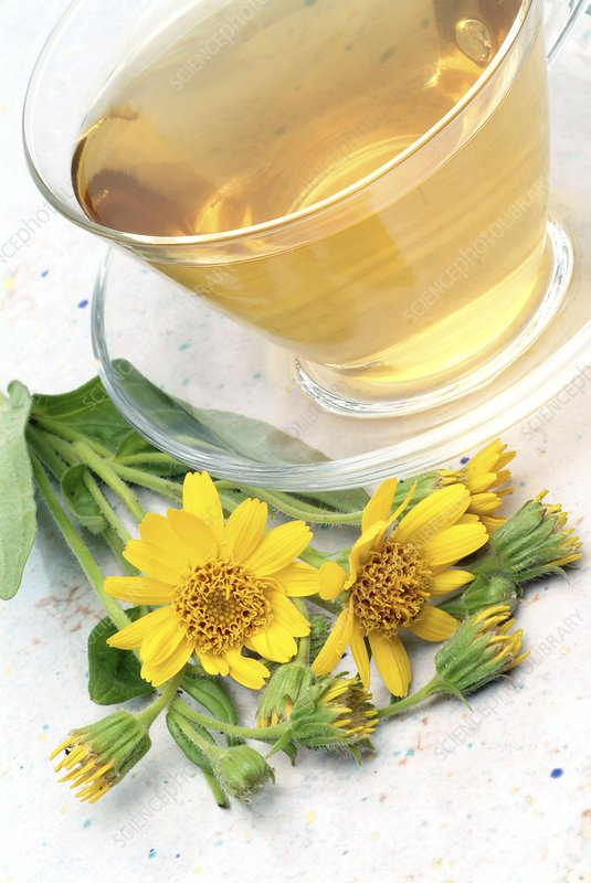 Mountain arnica herbal tea