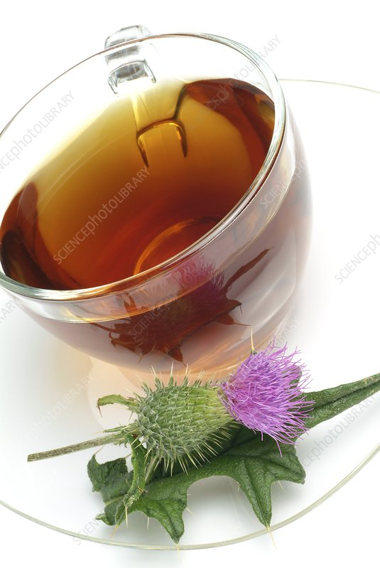 Cotton thistle herbal tea