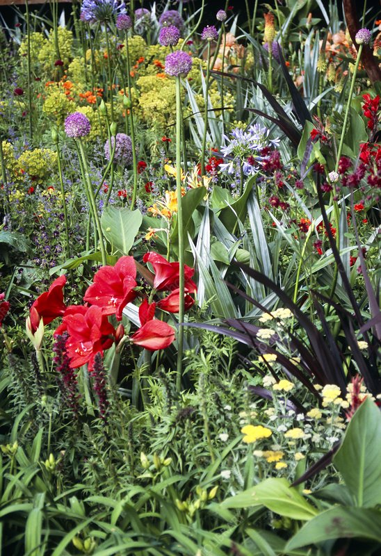 Mixed herbaceous flower bed