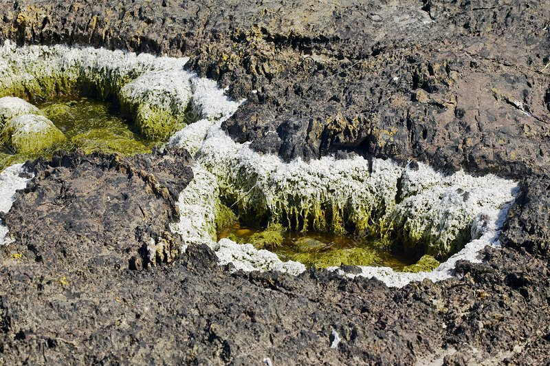 Dried seaweed and salt deposits