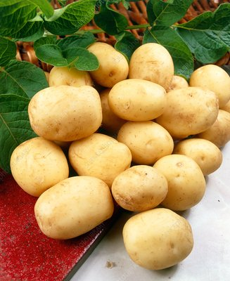 Potatoes (Solanum 'Foremost')