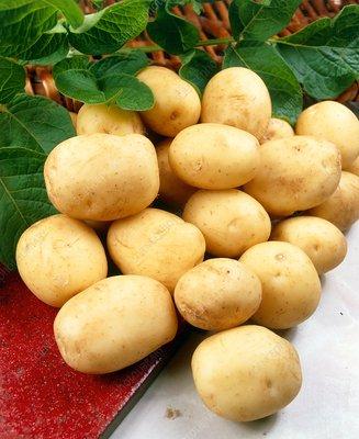 Potatoes (Solanum 'Foremost')