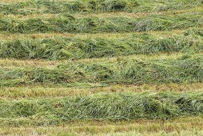 Harvested grass