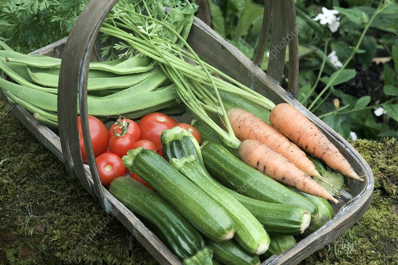 Home-grown organic vegetables