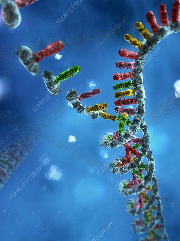 DNA assembly, artwork
