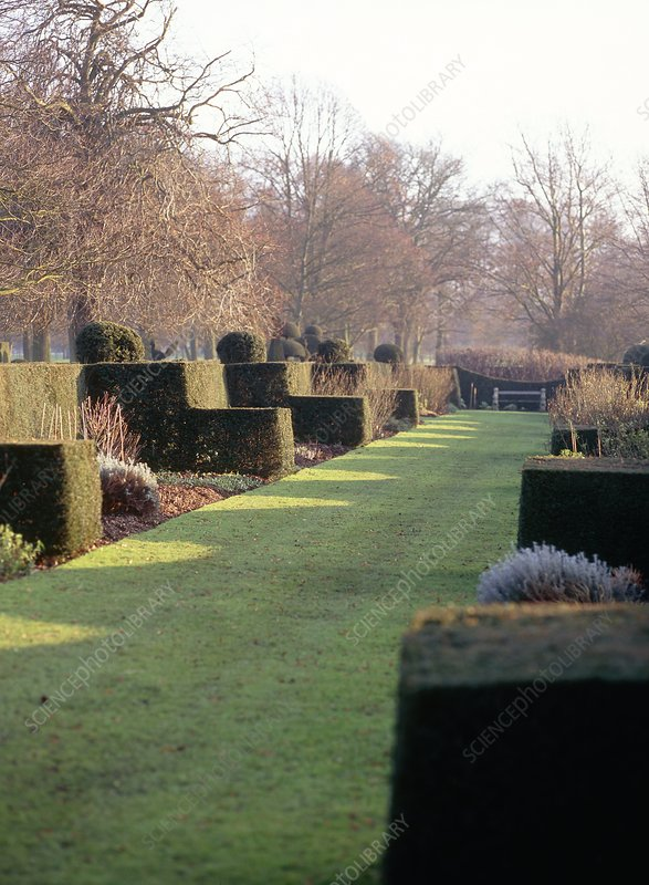 Topiaries in a garden's borders