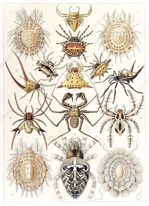 Arachnid organisms, artwork