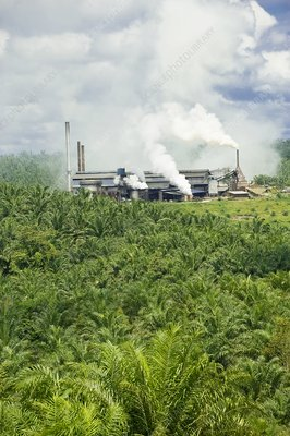 Palm oil processing plant, Malaysia