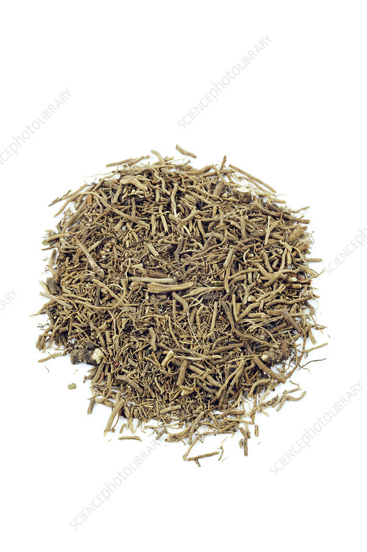 Snake root herb