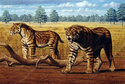 Sabre-toothed cats, artwork